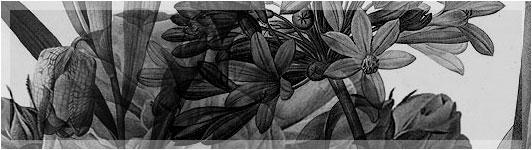 Victorian Botanicals Free Photoshop Brushes